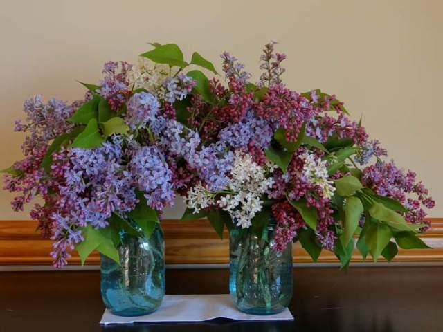 lilac-bouquets1