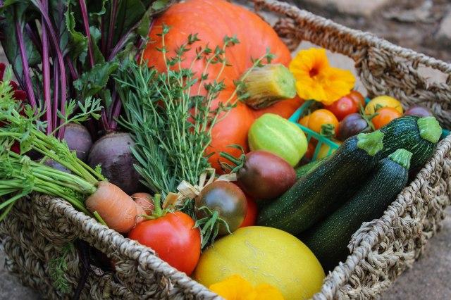 garden-harvest-3