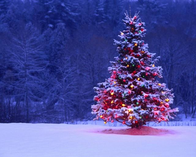 winter_season_snow_christmas_trees_tree_desktop_1280x1024_hd-wallpaper-844820
