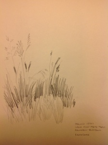 grasses drawing