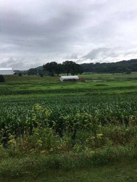 Farm-am walk